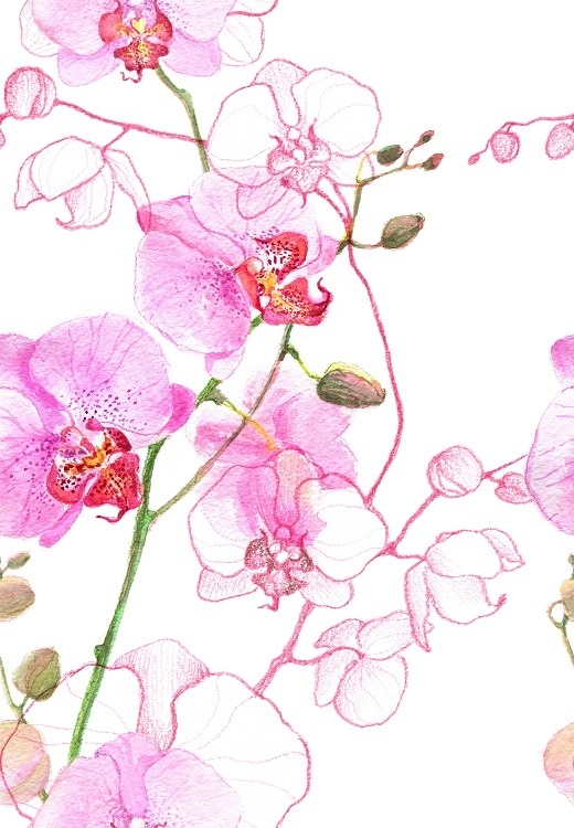 http://labell.ir/images/flowers/flowers-042.jpg