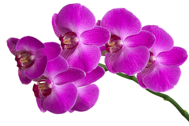 http://labell.ir/images/flowers/flowers-044.jpg