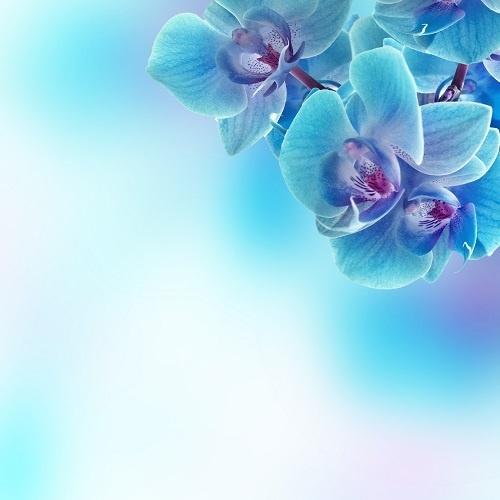http://labell.ir/images/flowers/flowers-045.jpg