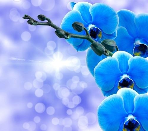 http://labell.ir/images/flowers/flowers-046.jpg
