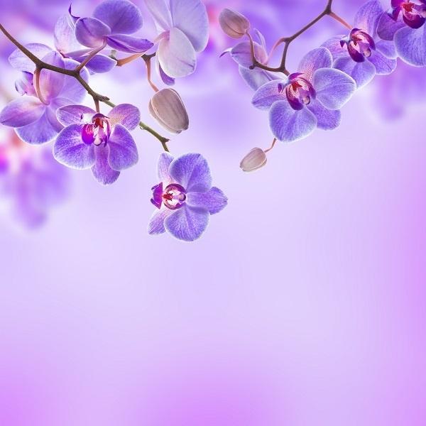 http://labell.ir/images/flowers/flowers-048.jpg