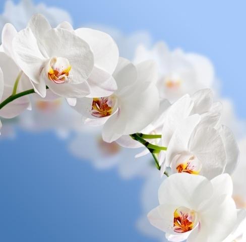 http://labell.ir/images/flowers/flowers-050.jpg