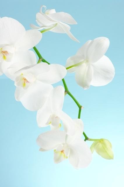 http://labell.ir/images/flowers/flowers-051.jpg