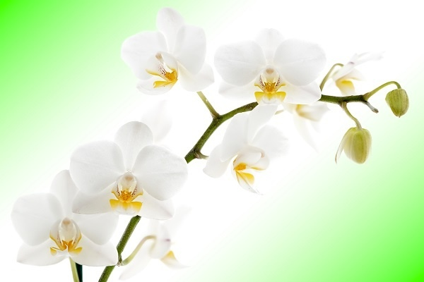 http://labell.ir/images/flowers/flowers-053.jpg
