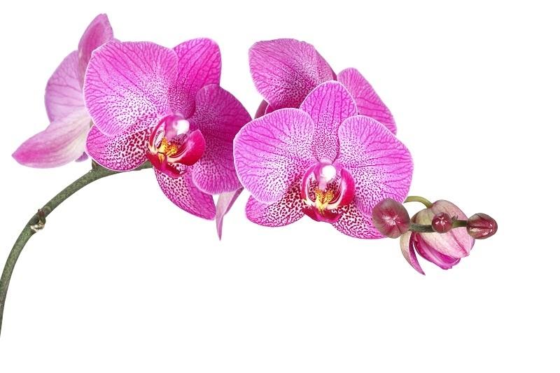 http://labell.ir/images/flowers/flowers-055.jpg