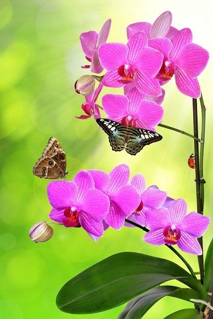 http://labell.ir/images/flowers/flowers-057.jpg