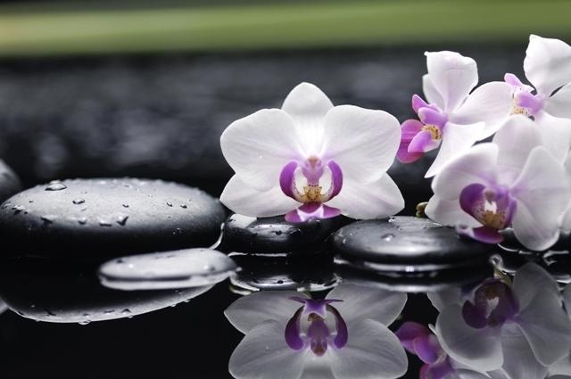 http://labell.ir/images/flowers/flowers-058.jpg