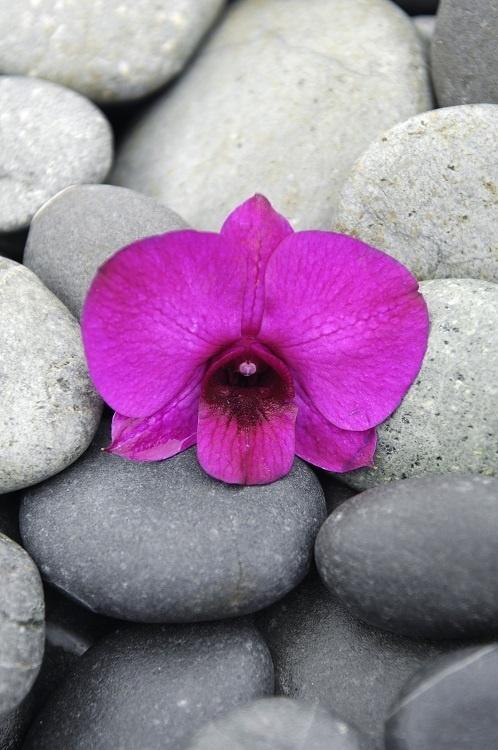 http://labell.ir/images/flowers/flowers-059.jpg