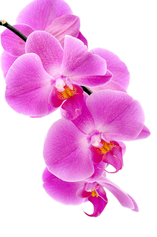 http://labell.ir/images/flowers/flowers-062.jpg