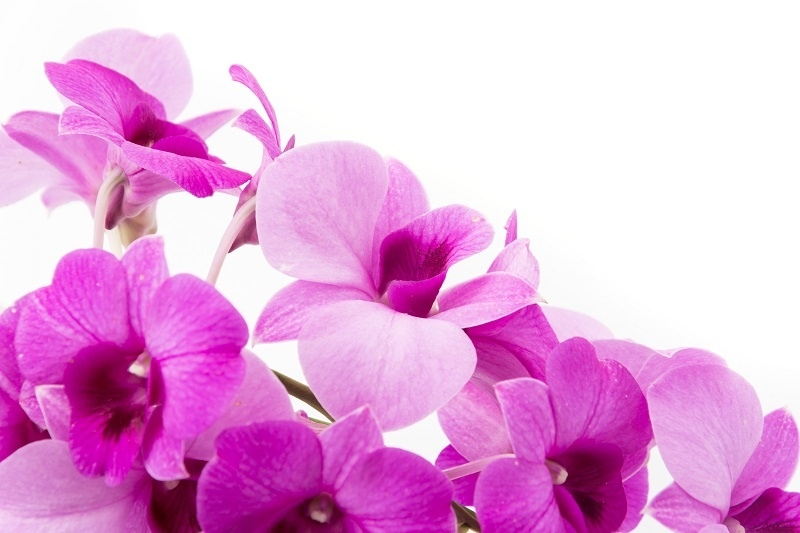 http://labell.ir/images/flowers/flowers-063.jpg