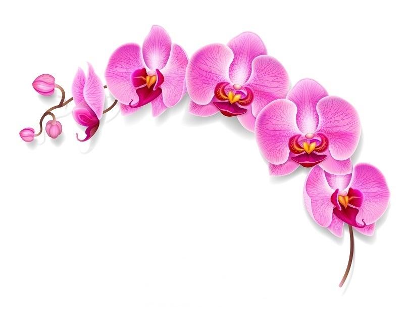 http://labell.ir/images/flowers/flowers-064.jpg