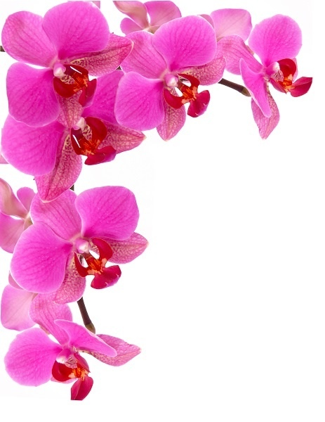 http://labell.ir/images/flowers/flowers-067.jpg