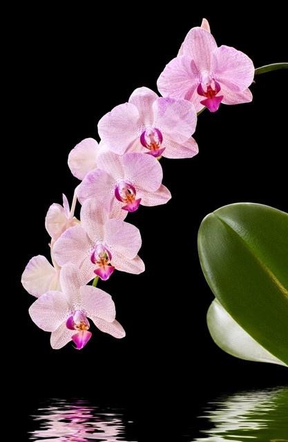 http://labell.ir/images/flowers/flowers-068.jpg
