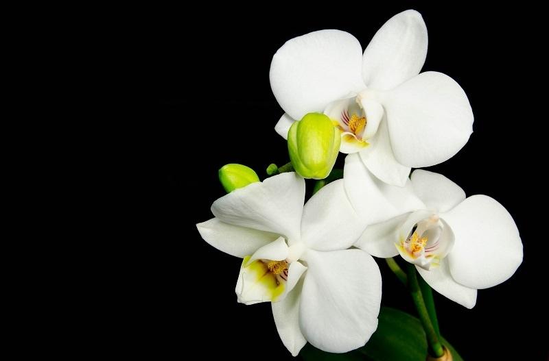 http://labell.ir/images/flowers/flowers-070.jpg