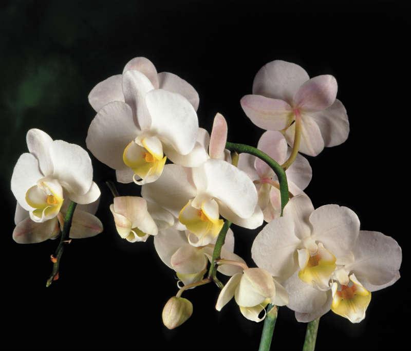 http://labell.ir/images/flowers/flowers-071.jpg