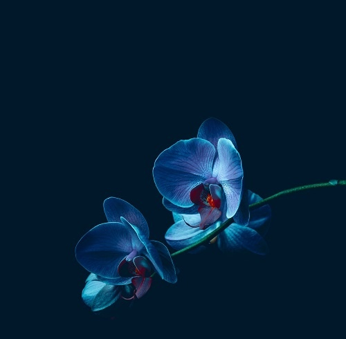 http://labell.ir/images/flowers/flowers-072.jpg