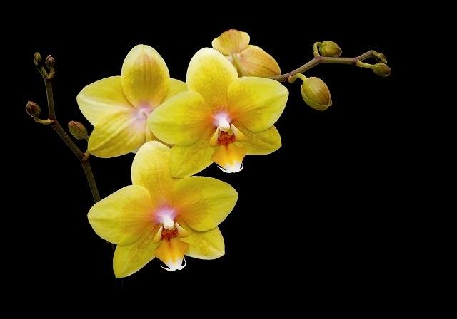 http://labell.ir/images/flowers/flowers-073.jpg