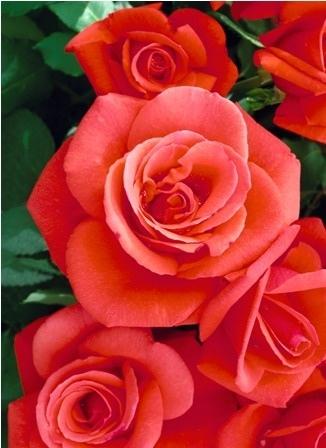http://labell.ir/images/flowers/flowers-075.jpg