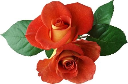 http://labell.ir/images/flowers/flowers-076.jpg