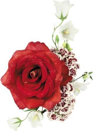 http://labell.ir/images/flowers/flowers-077.jpg