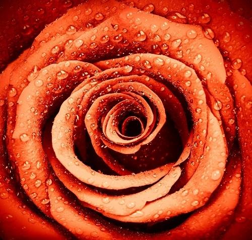 http://labell.ir/images/flowers/flowers-080.jpg