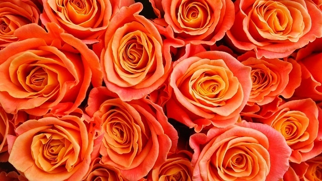 http://labell.ir/images/flowers/flowers-082.jpg