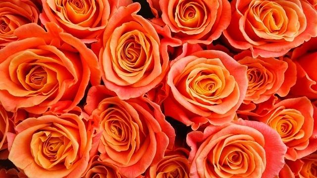 http://labell.ir/images/flowers/flowers-082.jpg