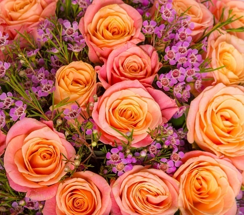 http://labell.ir/images/flowers/flowers-083.jpg