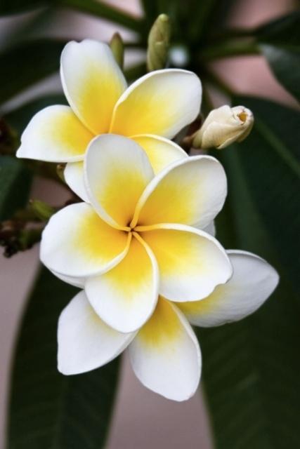 http://labell.ir/images/flowers/flowers-084.jpg