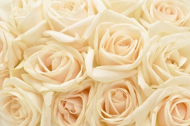 http://labell.ir/images/flowers/flowers-085.jpg