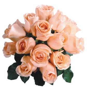 http://labell.ir/images/flowers/flowers-086.jpg