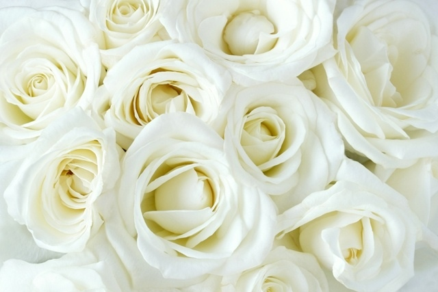 http://labell.ir/images/flowers/flowers-087.jpg