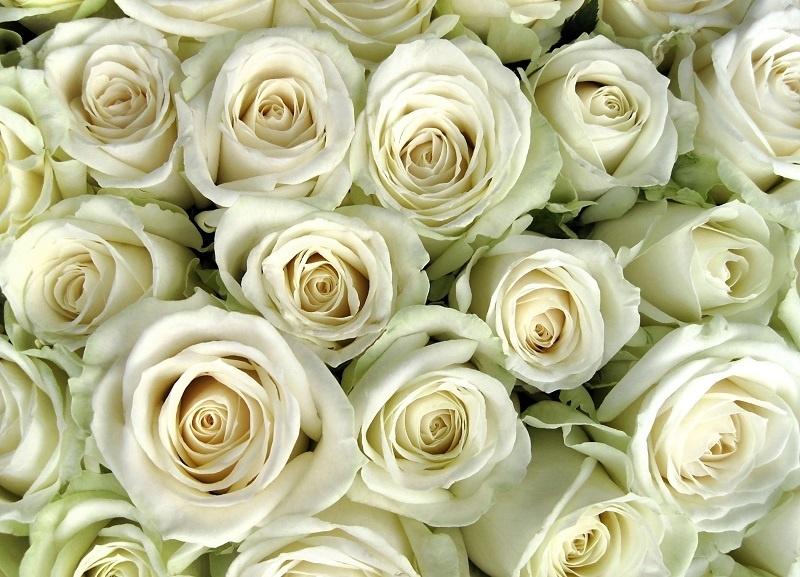http://labell.ir/images/flowers/flowers-089.jpg