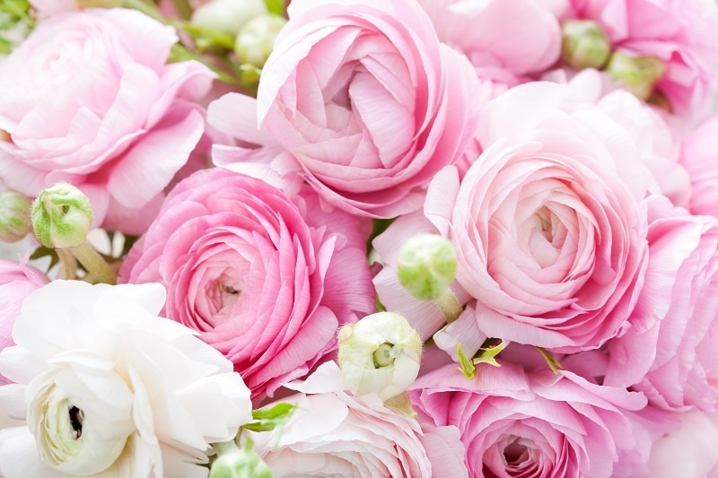 http://labell.ir/images/flowers/flowers-092.jpg