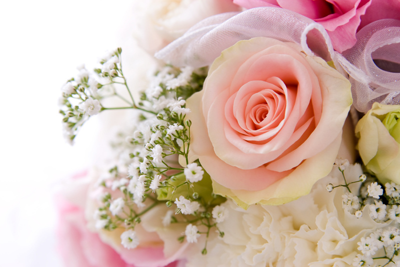 http://labell.ir/images/flowers/flowers-093.jpg
