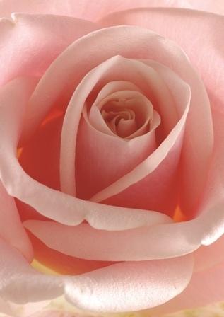 http://labell.ir/images/flowers/flowers-095.jpg