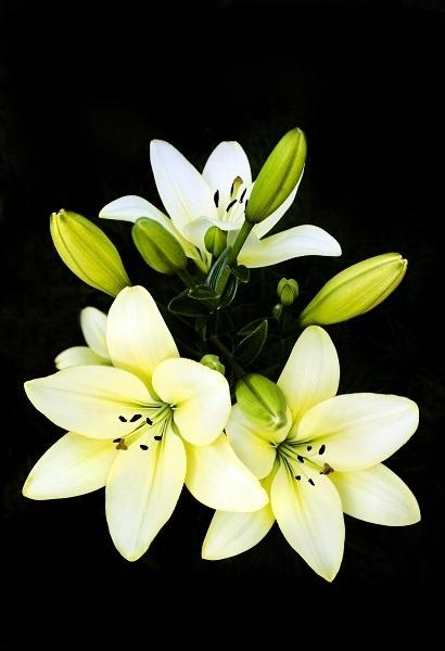 http://labell.ir/images/flowers/flowers-096.jpg