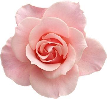 http://labell.ir/images/flowers/flowers-097.jpg