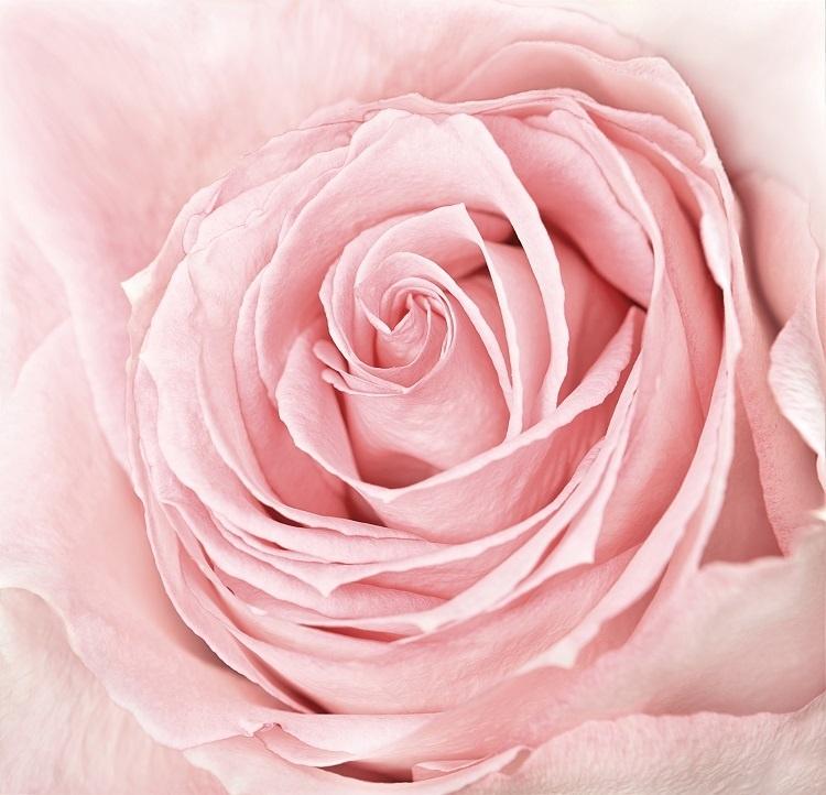 http://labell.ir/images/flowers/flowers-098.jpg