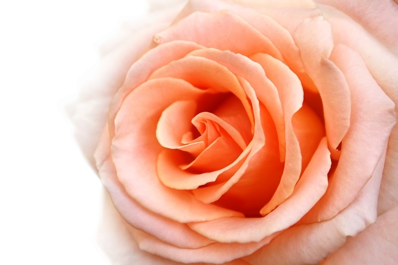 http://labell.ir/images/flowers/flowers-099.jpg