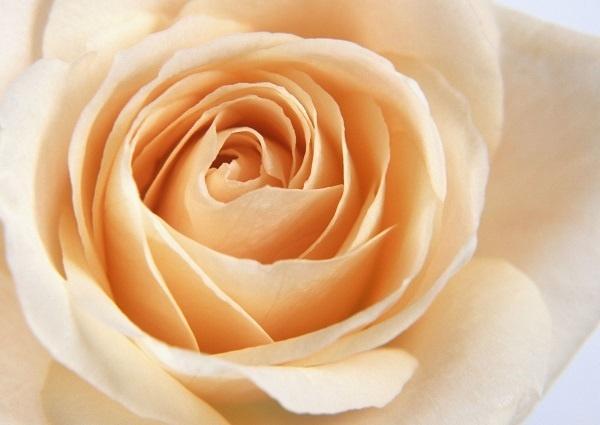 http://labell.ir/images/flowers/flowers-100.jpg