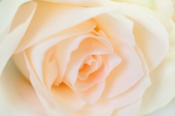 http://labell.ir/images/flowers/flowers-101.jpg