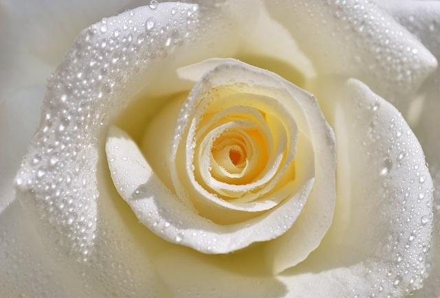 http://labell.ir/images/flowers/flowers-102.jpg