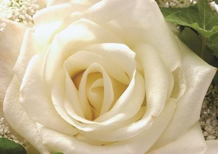 http://labell.ir/images/flowers/flowers-103.jpg