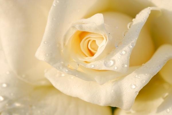 http://labell.ir/images/flowers/flowers-104.jpg