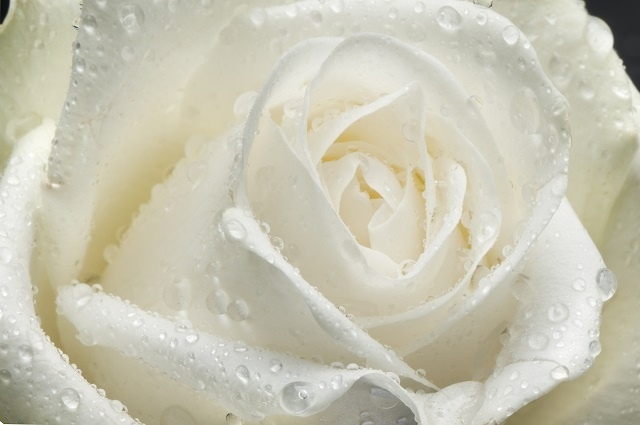 http://labell.ir/images/flowers/flowers-105.jpg