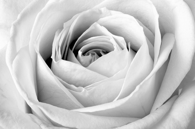 http://labell.ir/images/flowers/flowers-106.jpg