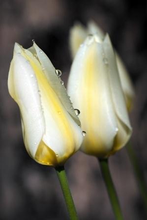 http://labell.ir/images/flowers/flowers-107.jpg
