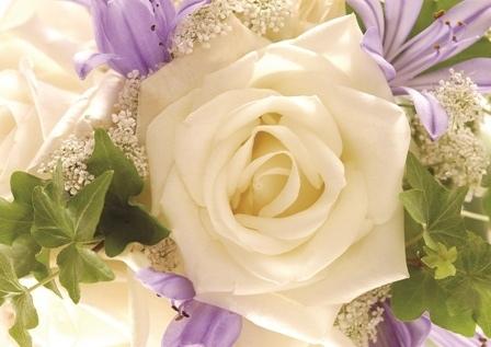 http://labell.ir/images/flowers/flowers-108.jpg