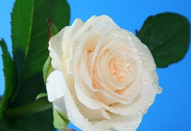 http://labell.ir/images/flowers/flowers-109.jpg